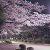 つくば市 桜
