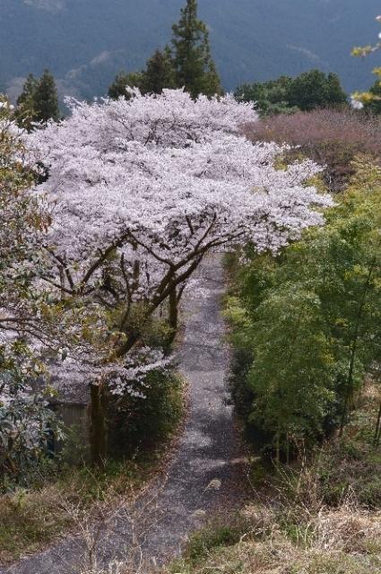 群馬県藤岡市 桜山公園
