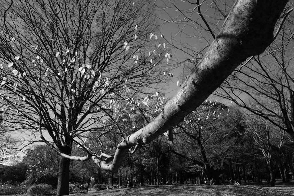 今日は代々木で11時