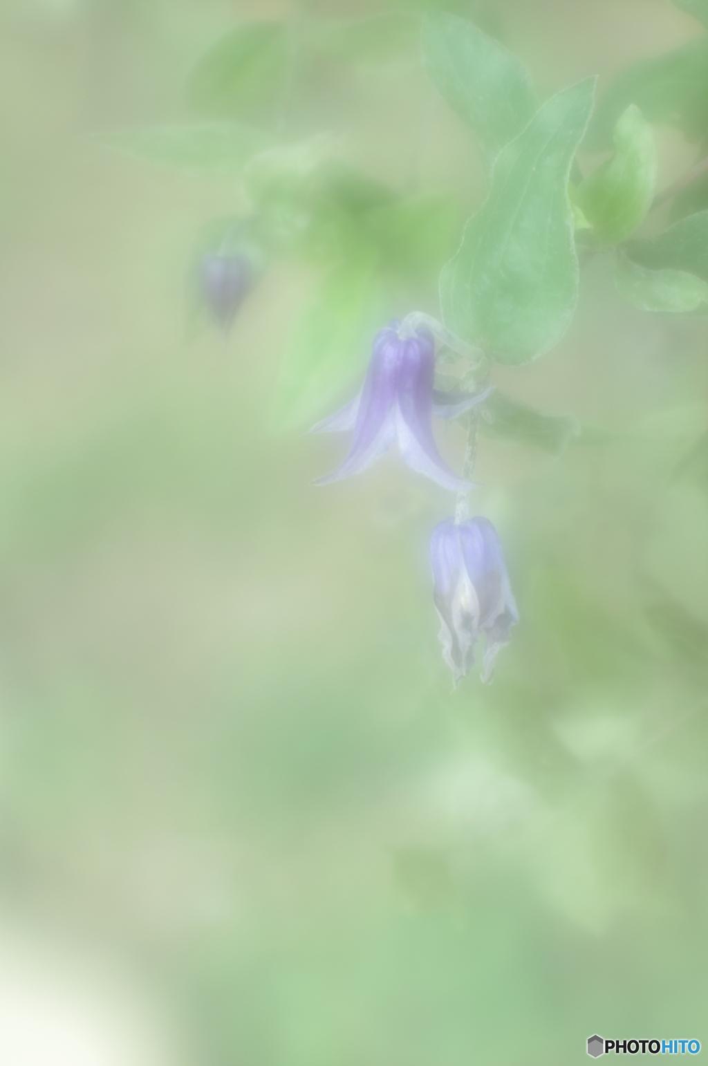 「名残の花」