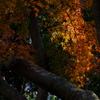 木漏れ日に輝く