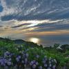 紫陽花越しの空と海