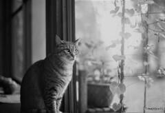 縁側Cat*