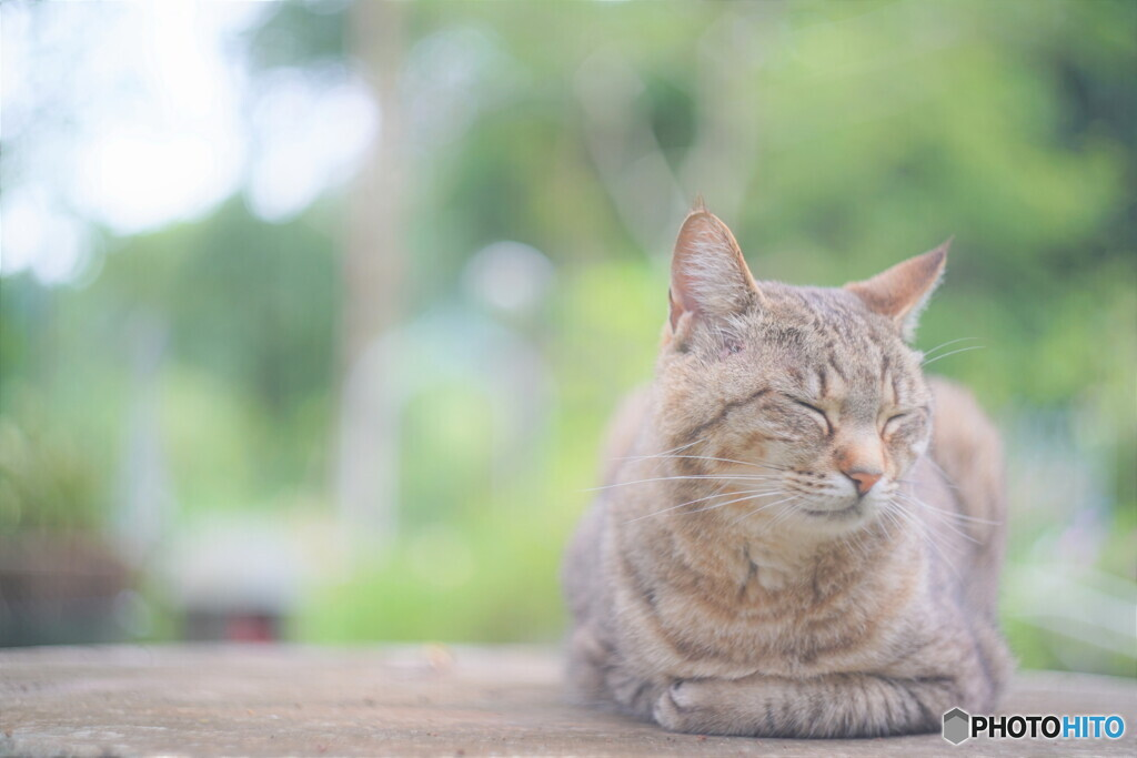 Helios Cat