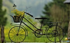 Rain-soaked bicycles