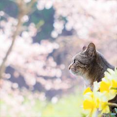 「Longing for springtime」