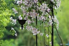 雨の庭(Jardins sous la pluie)