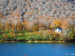 Beech forest lake*