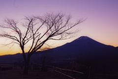 大野山より富士を望む.