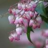 春 ほんのり桜色
