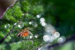 茄子と蜘蛛と梅雨玉
