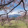 富士山キャッチャー