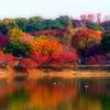 緑地の紅葉