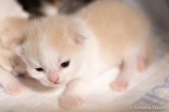 子猫 赤ちゃん