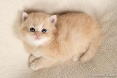 子猫 クリーム