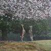鹿も喜ぶ春