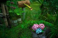 雨の季節の花手水