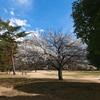 公園の梅林_6