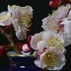 花マクロ 梅