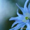 早春の妖精 14