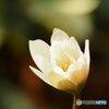 早春の妖精1