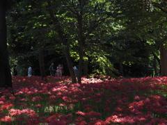 緑地公園でヒガンバナ1