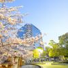 福山市役所と桜