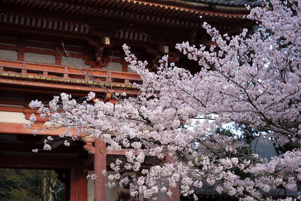 醍醐寺の花見