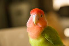 鳥のいる生活