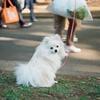 モデル犬②