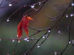 三月の雨 Ⅱ