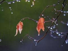 三月の雨 Ⅰ