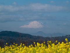 色見本:吾妻山公園 菜の花畑