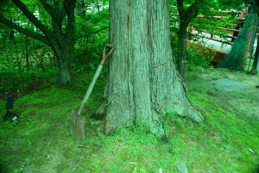 大木とスコップ