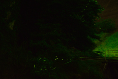 ほたる① 鳴淵ダム 下流河川公園