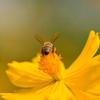 Bee hips