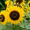 花壇に咲く花③