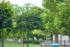 公園でそれぞれの時間