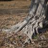 木の根っこが何故か気になる
