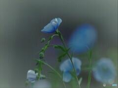 初夏の庭~亜麻