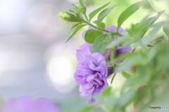 アスファルトの街の花壇