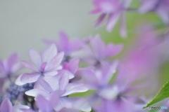 花のおしゃべり