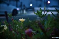 沿道の小さな花