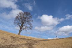 中倉山 孤高のブナ