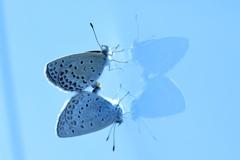 蝶々むすび