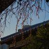 上野東照宮と梅の花