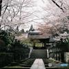 桜と石灯篭の道