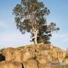 石積みの丘に立つ木
