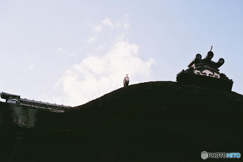 屋根にたたずむ鷺