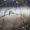 雨の日写真